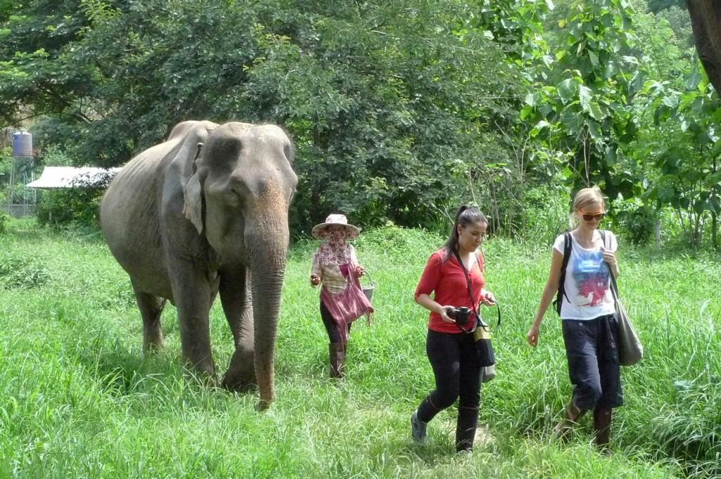 elephantnaturepark_elefant_gaeste