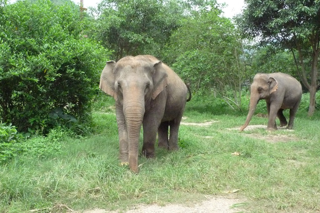 elephantnaturepark_elefanten